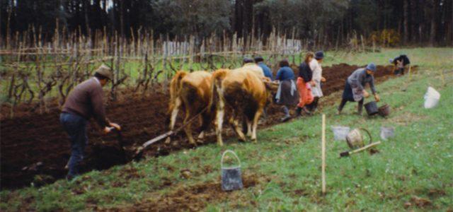 Vie à la campagne : labourer la terre dans l'ancien temps