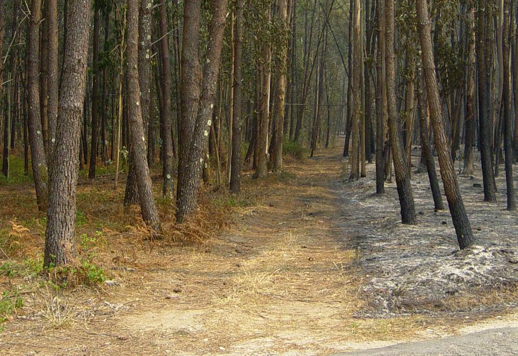 On distingue nettement une zone non incendiée et les cendres...