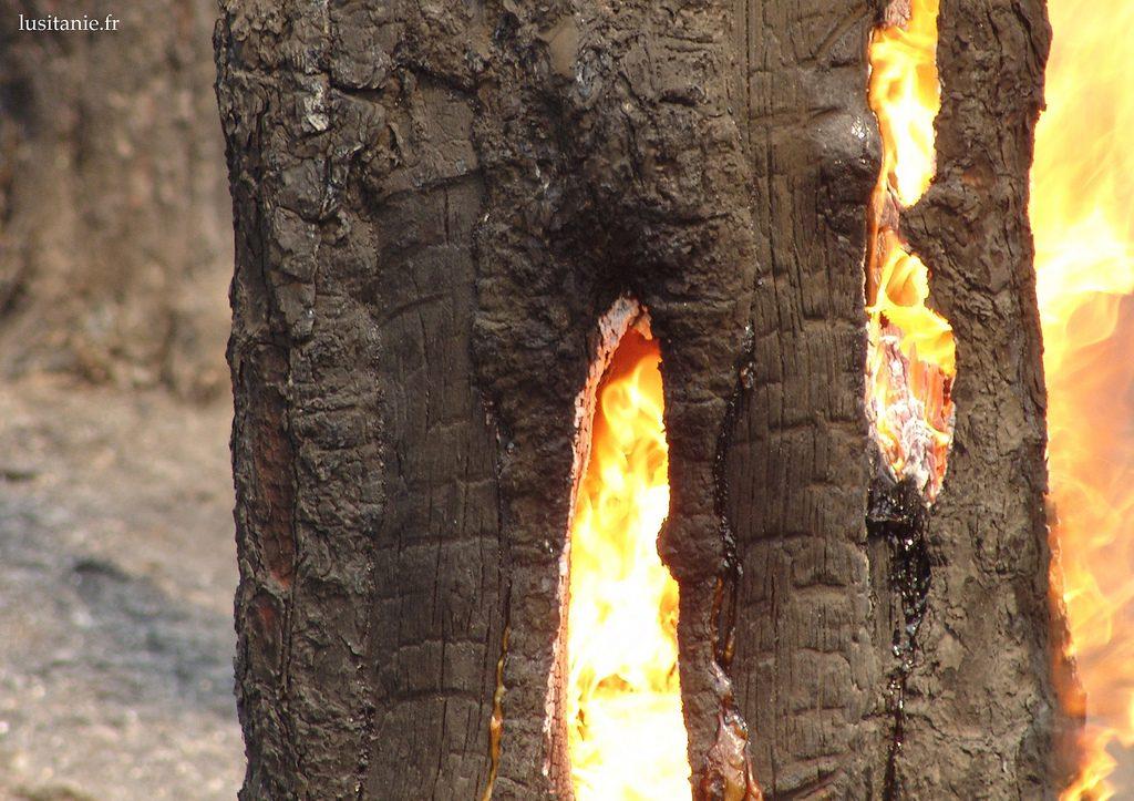 Incendies de forêt au Portugal