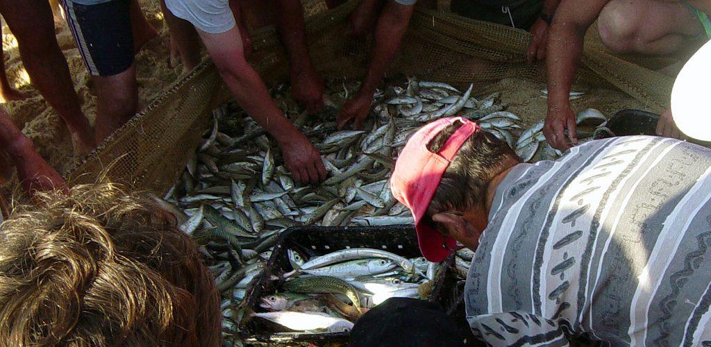 Acheter son poisson sur une plage portugaise