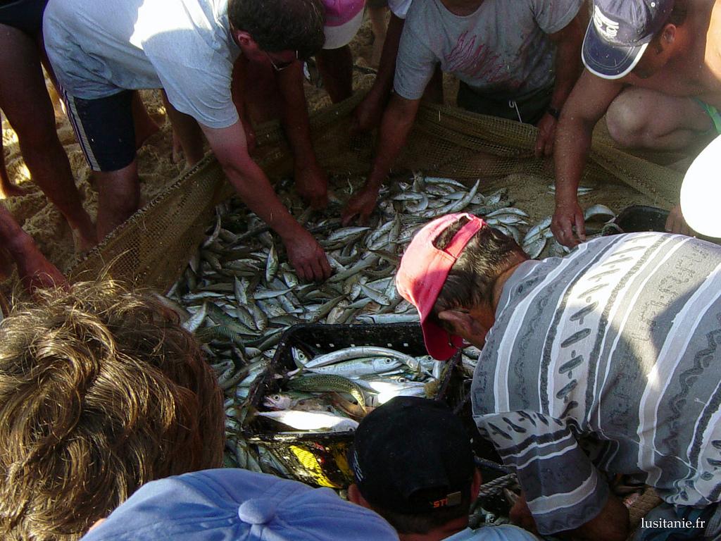 Acheter son poisson sur une plage portugaise le portugal for Poisson a acheter