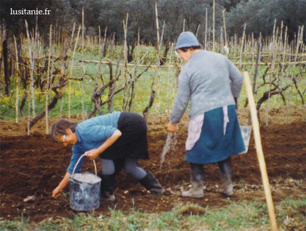 Femmes travaillant la terre