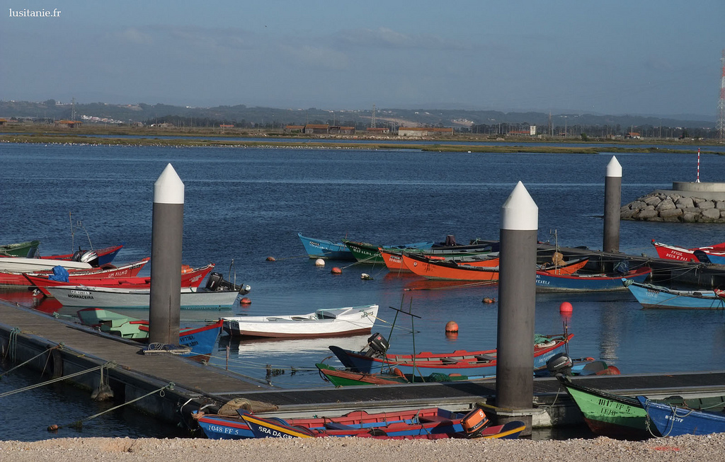Pêche à la ligne sur le Mondego, Port de Figueira da Foz