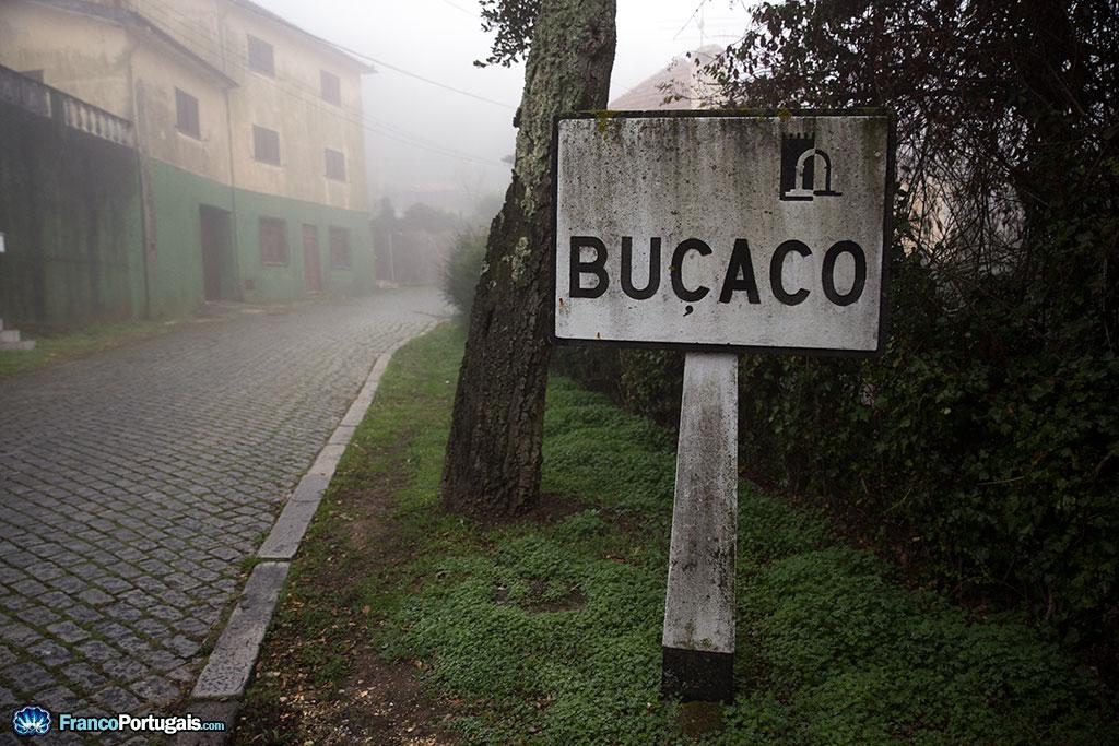Bienvenue à Buçaco. Illustration parfaite de l'humidité ambiante dans ce village du Portugal.