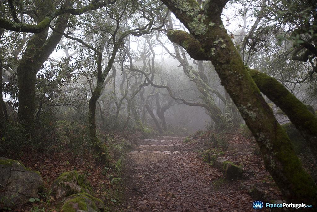 En descendant de la Cruz Alta, on entre dans la Forêt Relique