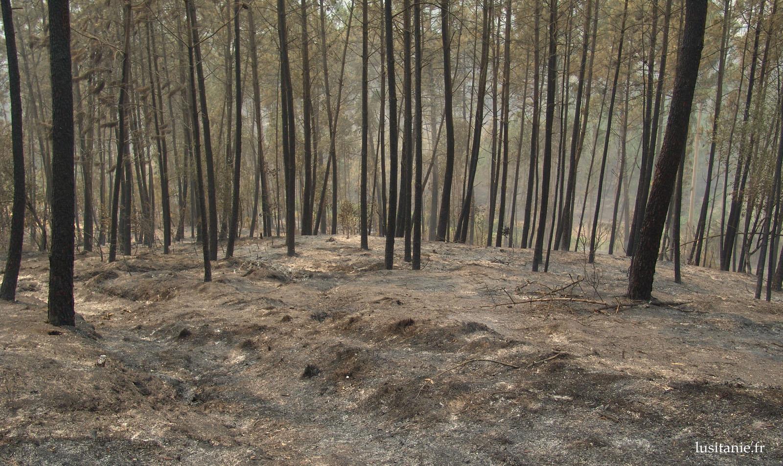 Le Pinhal de Leiria, après les incendies d'octobre 2017