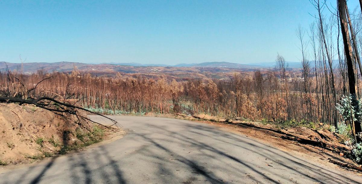 Forêt détruite par les incendies