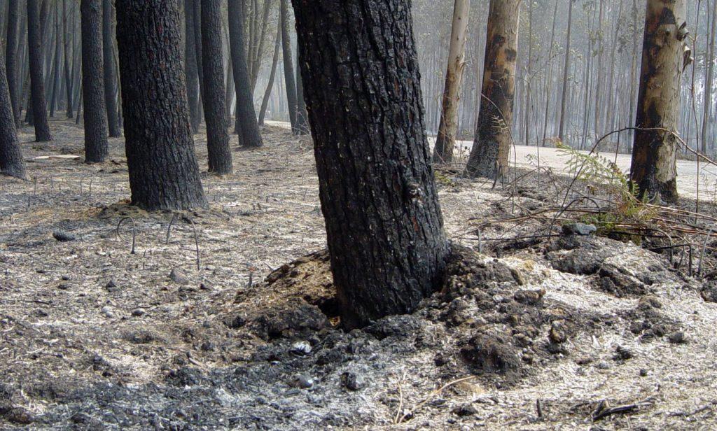 arbres brûlés