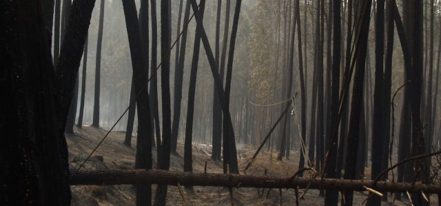 forêt brûlée